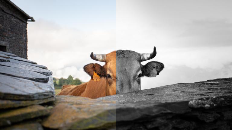 Как добавить пресеты Lightroom в Photoshop